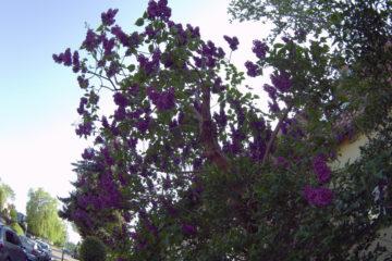 Motivation-flowers Pauli